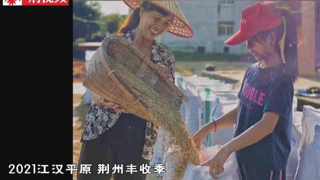 荆州迎来丰收季!
