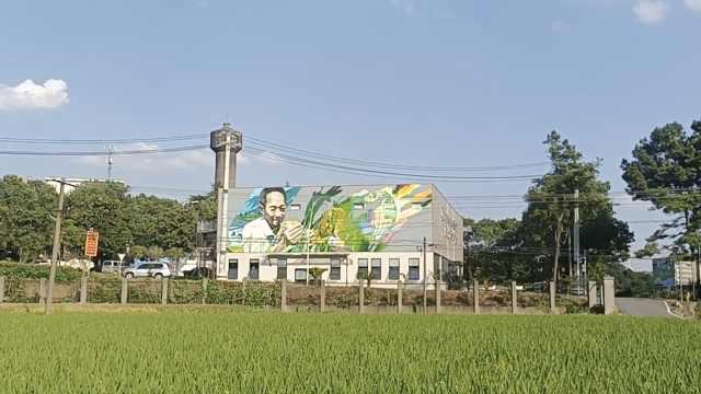 丰收节市民到袁隆平科研田献花悼念:花和您种的水稻一样好看