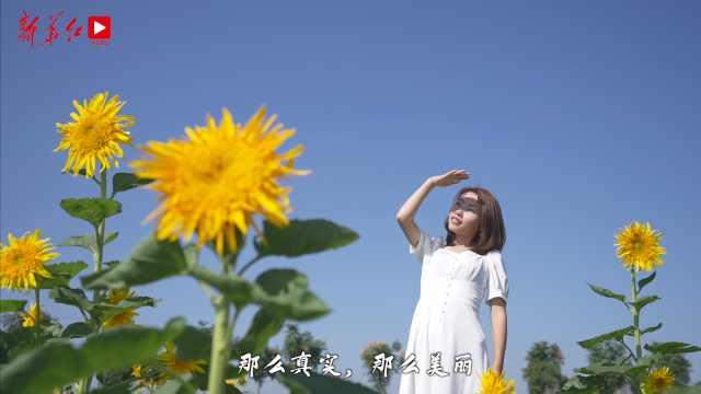 Vlog |一起去看向日葵