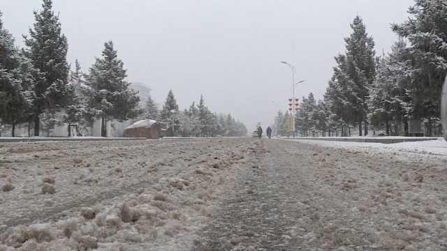 内蒙古迎入秋首场大范围降雪天气,林区一夜换上白装