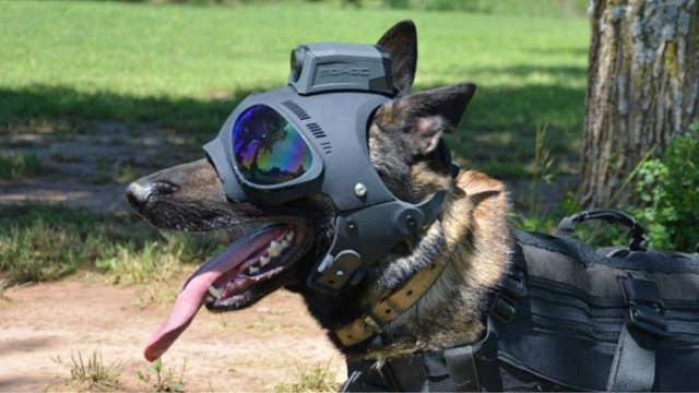 外挂摄像头和手枪的警犬头盔,汪星人战斗力飙升!