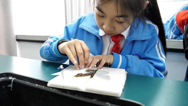 小学老师带学生制作300件标本:开阔视野,激发学习兴趣
