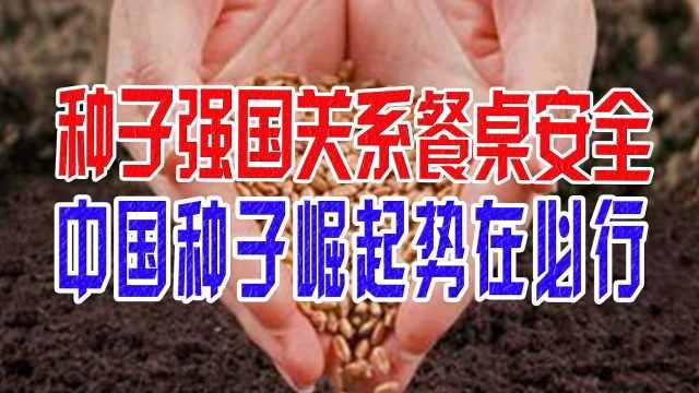 种子强国关系餐桌安全,中国种子崛起势在必行