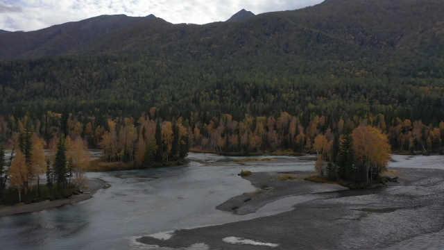 这是深秋的新疆喀纳斯,斑斓浸染如上帝打翻的七彩调色盘