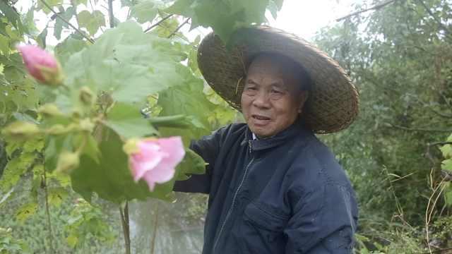79岁特派员推广葡萄种植40年,从100株到6万亩,带万户农民致富