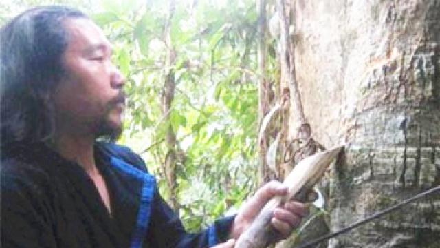 海南见血封喉毒树真那么可怕吗?