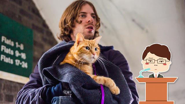 恕我直言,你可能是养了假猫