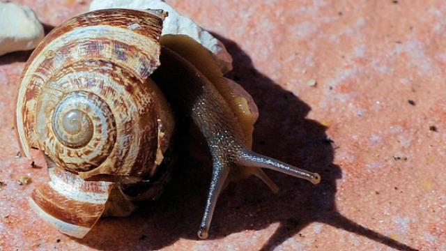 把蜗牛的壳踩碎了,还能长出来吗?