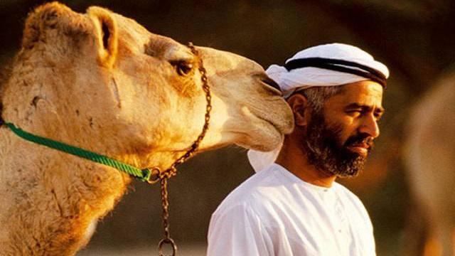 世界最贵骆驼:只有迪拜王储买的起