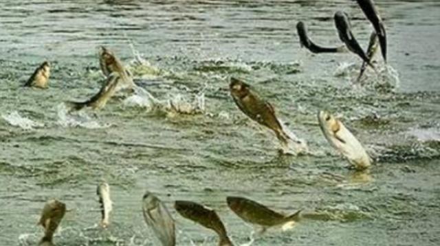 为什么挖个水塘就有鱼?鱼哪来的?