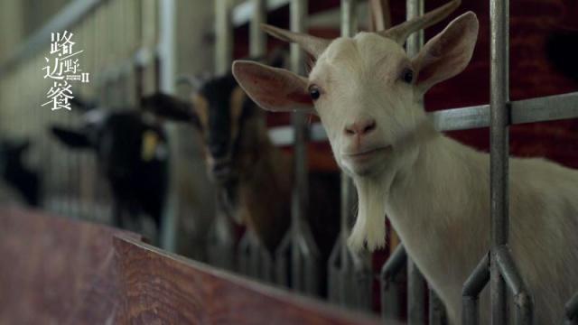 放羊的陈师傅成了一只食草动物