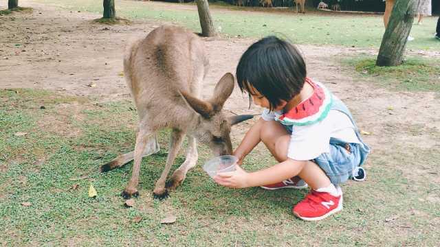 周末去哪儿?带娃去野生动物园撒欢