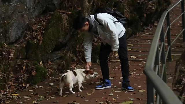 景区有只导游狗,能为游客指路!