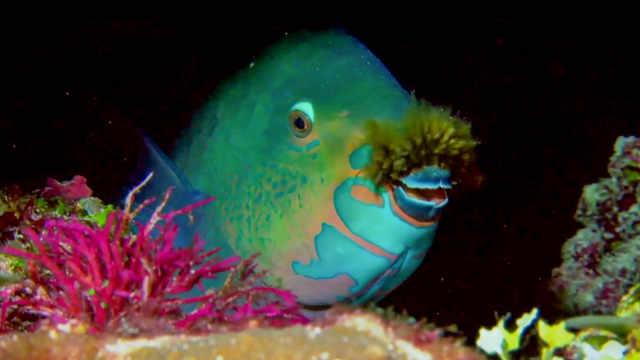 马尔代夫奇妙海底,怪鱼知多少?