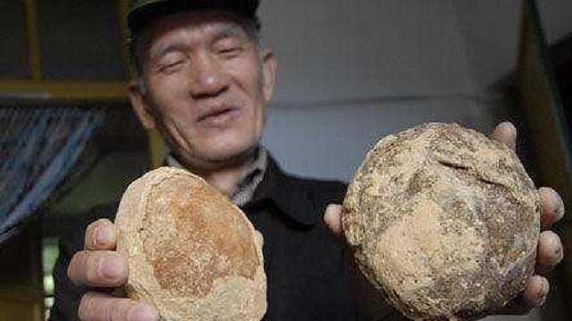 河北农民家中有30个恐龙蛋?