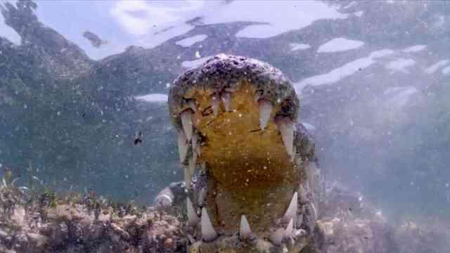 南非推出与鳄鱼潜水项目,你敢玩吗