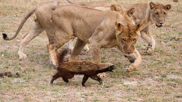 自然界存在基本没有天敌的动物吗?