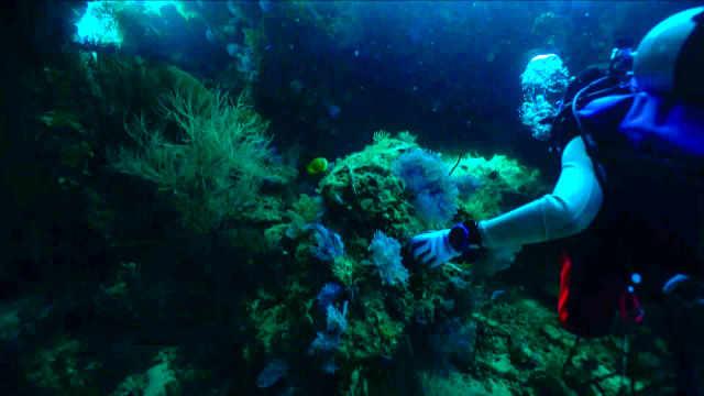 挑战难度潜水,邂逅四线笛鲷鱼群