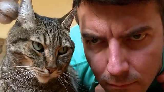 铲屎官模仿猫咪愤怒脸,惨遭嫌弃