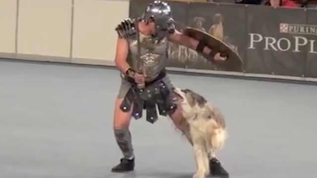 这是一条战斗狗,与主人同杀敌!