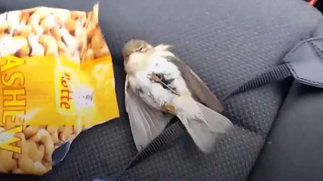暖心!小鸟被冻僵,好心人给它温暖