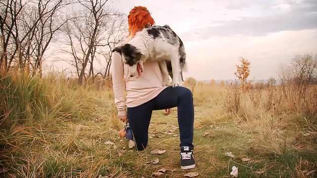 红发美女与陨石边牧的爱情故事
