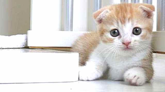 南京救猫阿姨,给小动物第二条生命