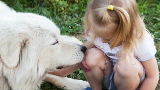 人受伤让动物舔舐真促使伤口愈合吗
