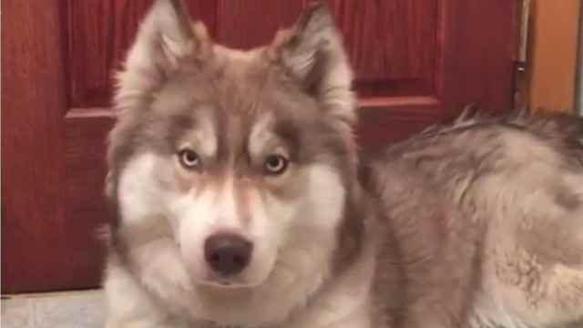 狗狗跟着主人说话,竟然叫出皮卡丘
