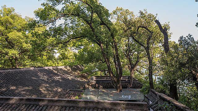 """杭州""""最环保""""公厕里穿出百年大树"""