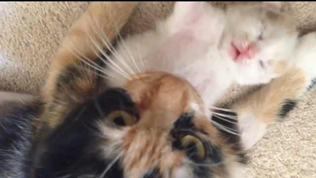温馨!小猫做噩梦,猫妈妈温柔安抚