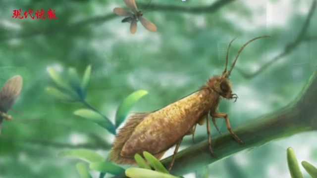 穿越近2亿年,最早的飞蛾是土豪金