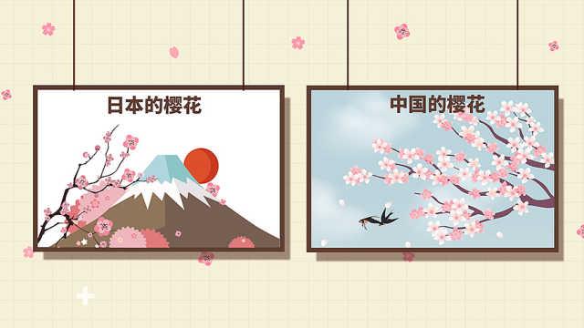 日本的樱花和中国的樱花有什么不同