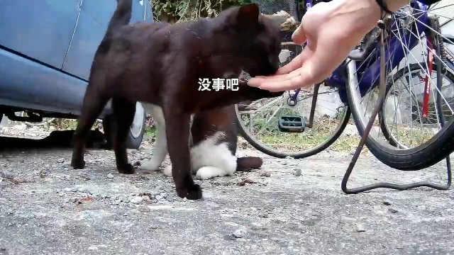同样是猫,做猫的差距咋就那么大呢