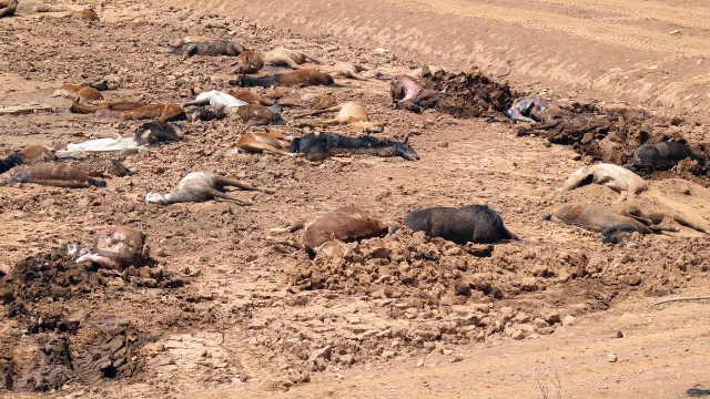 亚利桑那州近200匹马死于严重干旱