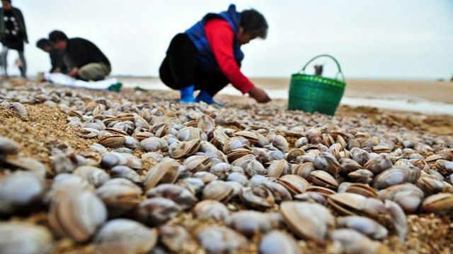 嘘,挖蛤蜊其实也是个技术活