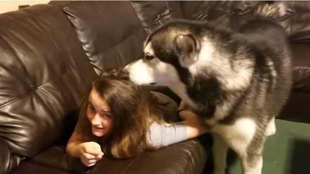 太魔性!狗狗蹭主人蹭到如痴如狂