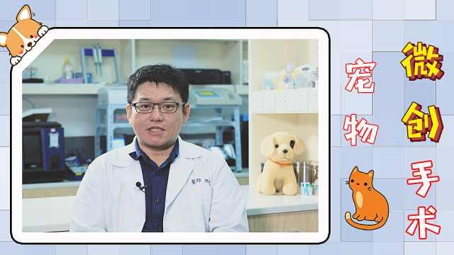宠物也能做微创手术?一定很贵吧!