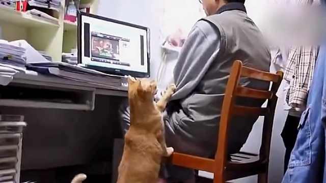 爸爸沉迷看剧,喵喵拍他手臂:吃饭啦