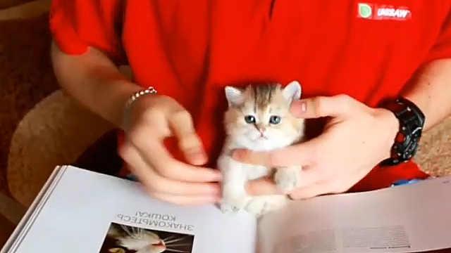 陪主人一起看书的小奶猫,太萌了吧