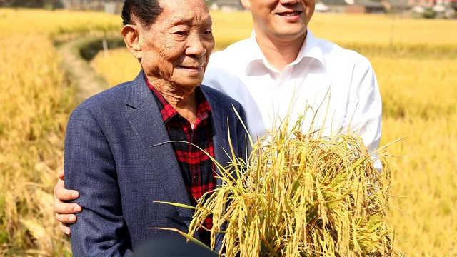 袁隆平在沙漠种水稻能亩产1000斤!