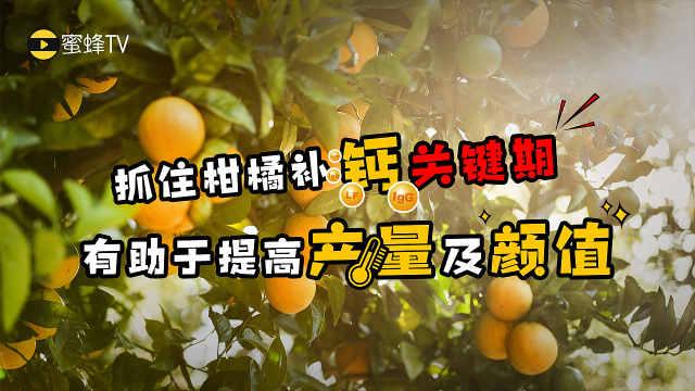 划重点!柑橘补钙百科全书