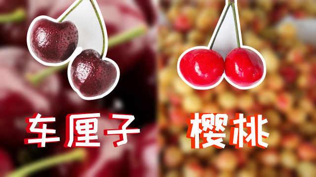 樱桃和车厘子究竟是什么关系?