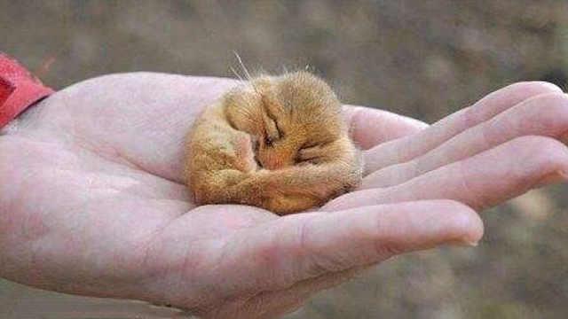 世界上最困的动物,5年里4年睡觉!