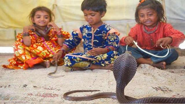 印度孩子拿蛇当玩具,不怕被咬吗?