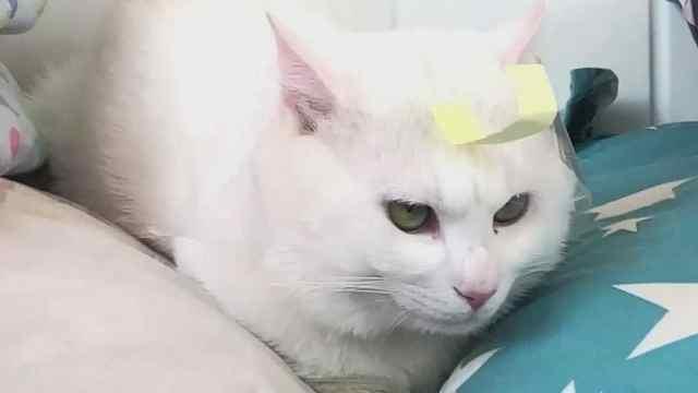 家里的猫毛满天飞怎么办