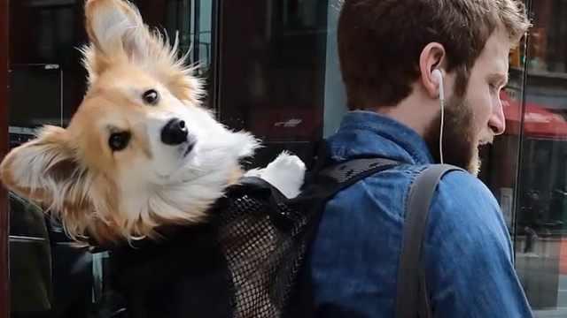 纽约铲屎官带狗坐地铁,机智装包