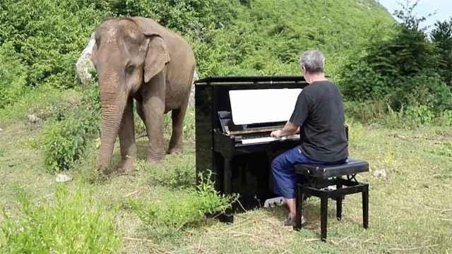 感人!英国钢琴家为眼盲的大象弹奏