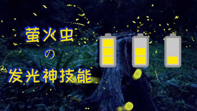萤火虫是怎么发光的?神技能get!