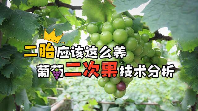 果农福利:葡萄无花无果解决方案!